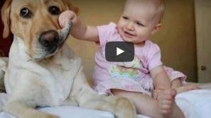 فيديو أطفال يزعجون الكلاب وردات فعل مضحكة: أحد الأطفال يحاول أكل الكلب!