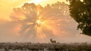 بينهم بحيرة متجمدة وحيوانات أفضل صور في 2019