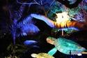 لعشاق البهجة والسفر.. 27 صورة ستغريكم  بزيارة مهرجان الأضواء السنوي في سيدني