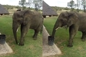 فيل ذكي