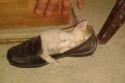 50 صورة تثبت أن القطط يُمكنها النوم في أي مكان