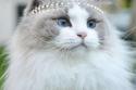 صور قطة تعيش حياة الأميرات وترتدي ملابسهن