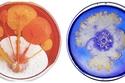 صور مذهلة سوف تغير نظرتك للبكتيريا.. أشكال وألوان لن تتخيلها