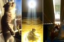 24 لقطة طريفة تؤكد مدى عشق القطط لضوء الشمس