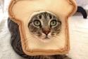 القطة التوست