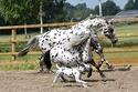ترجع هذه الحيوانات لمدربة الخيول الهولندية غريتيجي أريندز