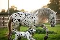 الحيوانات تشترك في اللون الأبيض المختلط بالبقع السوداء