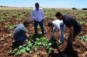 زراعة الشيلنغو