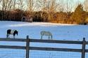أحصنة صغيرة تقف بهذا الشكل ولكن!