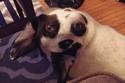 في البداية اعتقدت أن فتحة أنف كلب صديقي كانت عينه