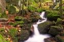 صور مملؤة بالرهبة لأغرب وأجمل الغابات في العالم: الغابة الملتوية مذهلة
