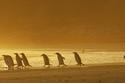 البطريق المتأخر عن البقية