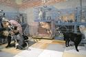 الصينية ون جون هونج تقوم بتربية عدد كبير من الحيوانات في منزلها