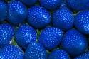 العلم يكشف السر.. لماذا لا نرى إلا الفراولة الحمراء رغم أنها زرقاء؟