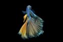 22 صورة لأسماك ترقص الباليه بنعومة.. ستذهلك بروعة شكلها وحركتها