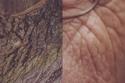 تجاعيد الوجه تشبه ترسبات بعض الصخور