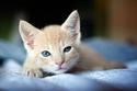 صور رائعة لحيوانات تتميز بعيون جميلة وساحرة بطريقة غريبة
