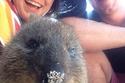 صور السيلفي مع الكوالا هي الأشهر في استراليا في الوقت الحالي