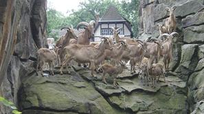 صور أجمل وأفضل 10 حدائق حيوان في العالم