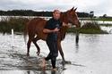 صور مذهلة لرجل ينقذ خيوله العربية من الغرق في أستراليا!