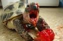 صور حيوانات تأكل الفراولة فبدت وكأنها وحوش قادمة من أفلام الرعب