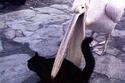 صور مضحكة لحيوانات تفرض سيطرتها على الأشياء بقوة