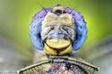 صور مقربة تجعلك ترى أعين الحشرات لأول مرة على حقيقتها!