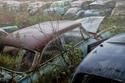 صور مقبرة سيارات الحلفاء في الحرب العالمية الثانية