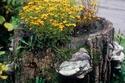 صور مدهشة لزراعة الورود فوق جذوع الأشجار