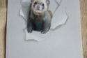 صور رائعة لفنانة رسمت حيوانات تريد أن تقفز من الورقة