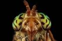 صور لأغرب أنواع النحل لم تروها من قبل!