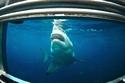 صور رائعة لـ5 مخلوقات بحرية مهددة بالانقراض في أستراليا