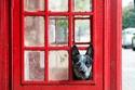 صور طريفة توصف حياة الكلاب في لندن