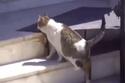 القطة تقترب من المستشفى