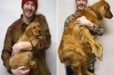 15 صورة مدهشة لكلاب صغيرة كبرت حتى أصبحت بحجم جودزيللا