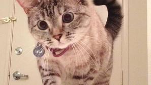 صور: تجني 8000 دولار للتعليق الواحد.. القطة اليتيمة التي أبهرت العالم