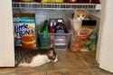 داخل خزانة الطعام
