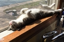 صور أماكن غريبة تلجأ لها القطط لتدفئة نفسها.. لن تتمالك ضحكاتك