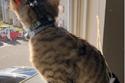 القط أصلان تبنته سيدة أمريكية تدعى سواتي كوماندوري