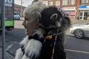 الصورة لسيدة تسير بصحبة حيوان الراكون الأليف