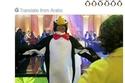 صور أطرف تعليقات النشطاء حول عرض البطاريق في مصر
