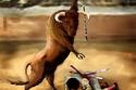 كيف كانت الحيوانات ستعذبنا لو أنها تحكم العالم؟ صور خيالية مرعبة تتحدى ثبات أعصابك