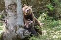 هل يمكنك رؤية أنثى الدب في هذه الصورة الغريبة؟