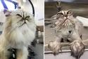 15 صورة طريفة للغاية للحيوانات قبل وبعد الاستحمام.. لا تفوتوا مشاهدتها