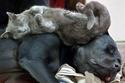 علاقة صداقة رائعة جمعت هؤلاء القطط بالكلاب