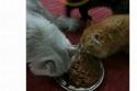 فتاة تسخر من أكل قططها