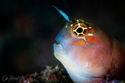 إحدى الأسماك النادرة في بحر الفجيرة
