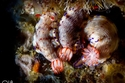 عالم آخر في الإمارات لا نعرف عنه شيء: صور رائعة للحياة تحت الماء