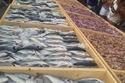 أكبر طاولة للمأكولات البحرية في البترون