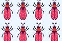 ابحث عن الحشرة المختلفة